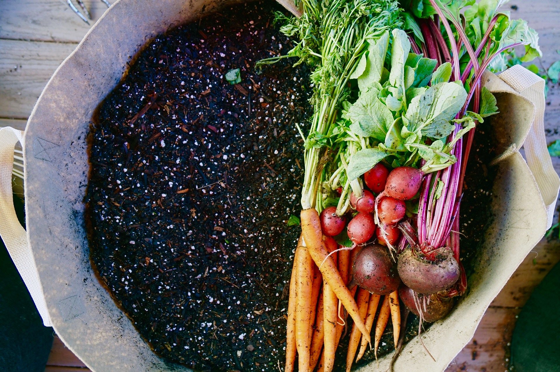 3 Tips for Growing Carrots, Radishes and Beets