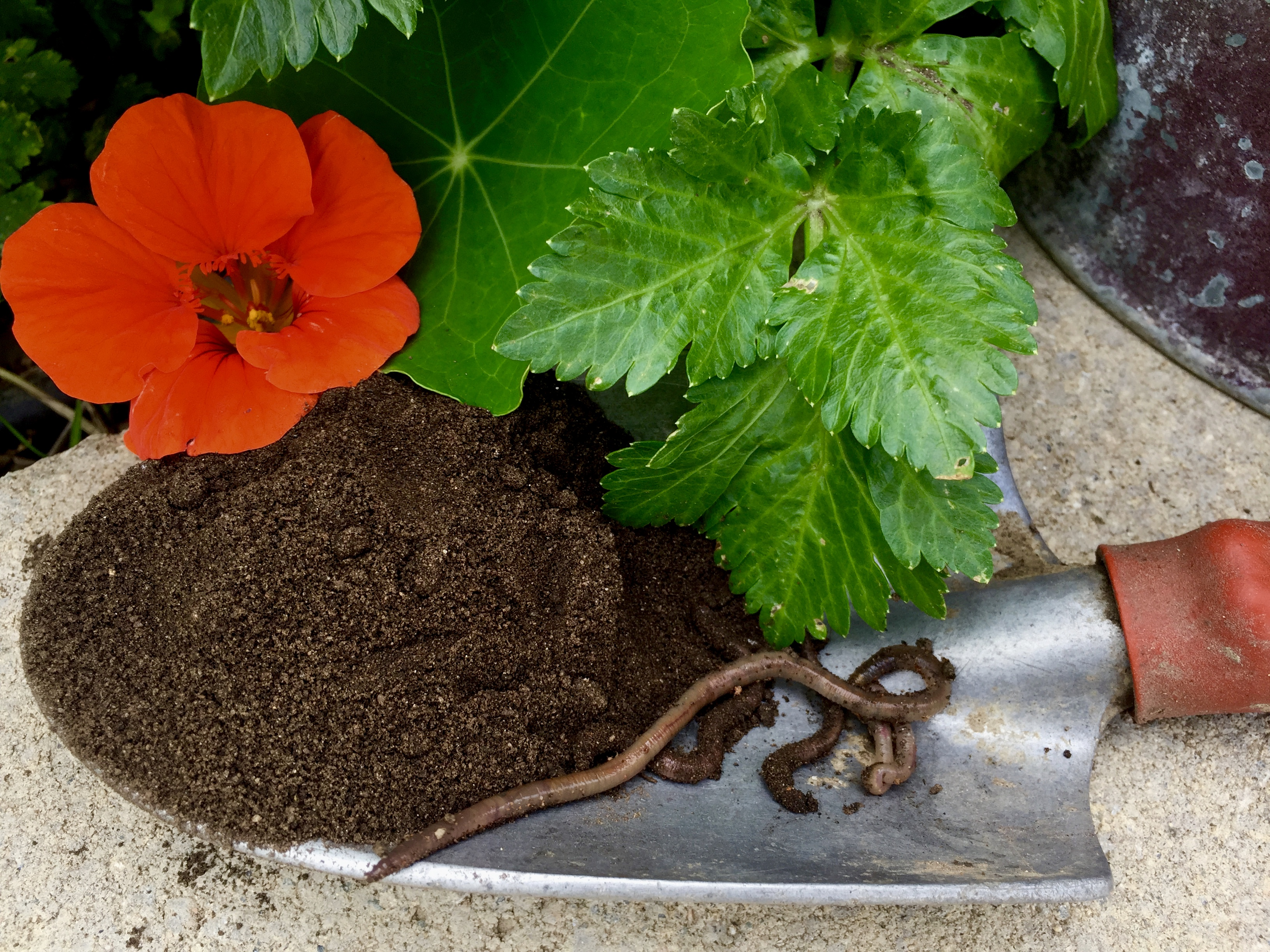 How to Use Worm Castings in Your Garden