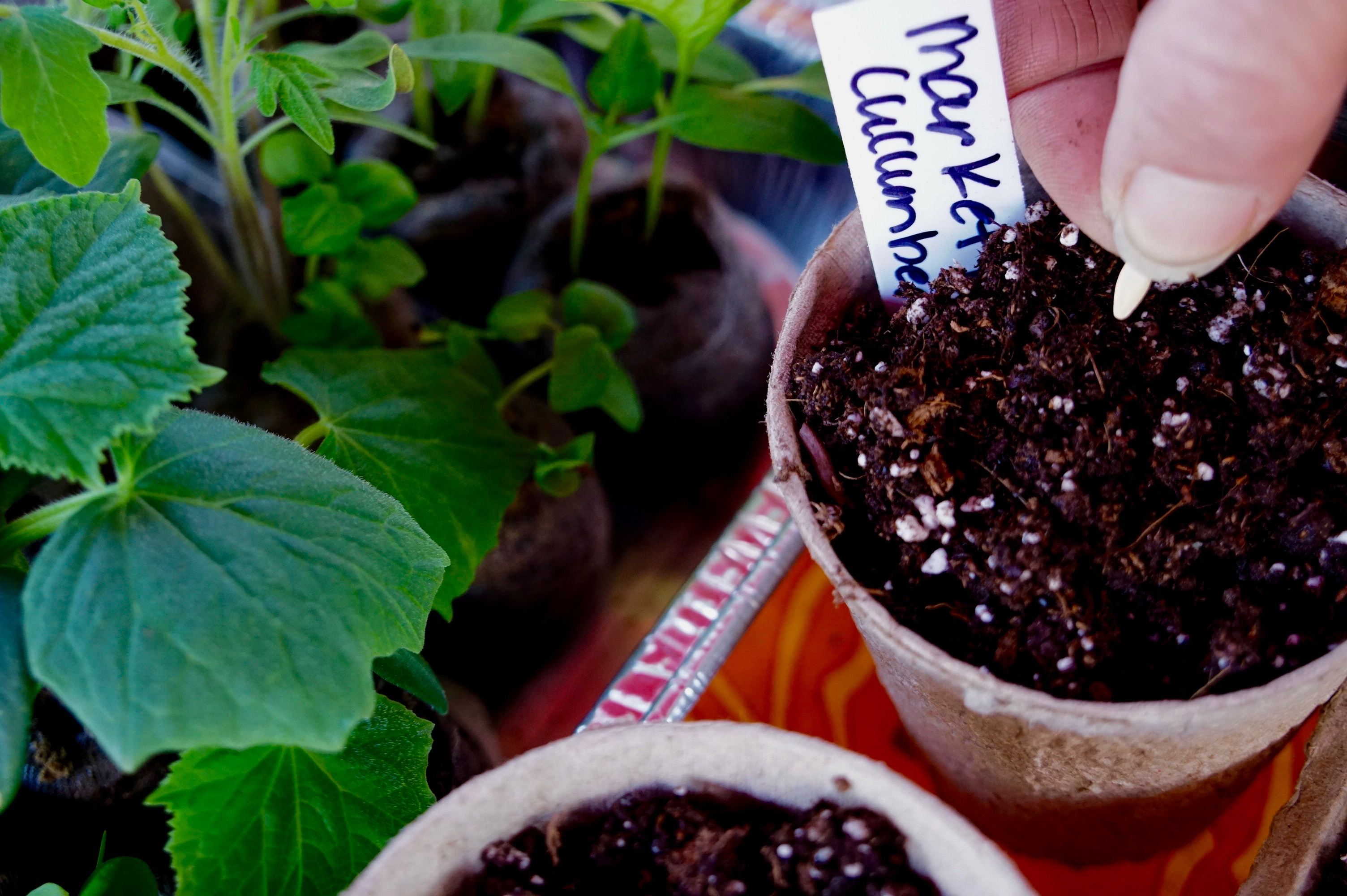 Starting Seeds Indoors for Your Spring Garden – 2 Easy Ways