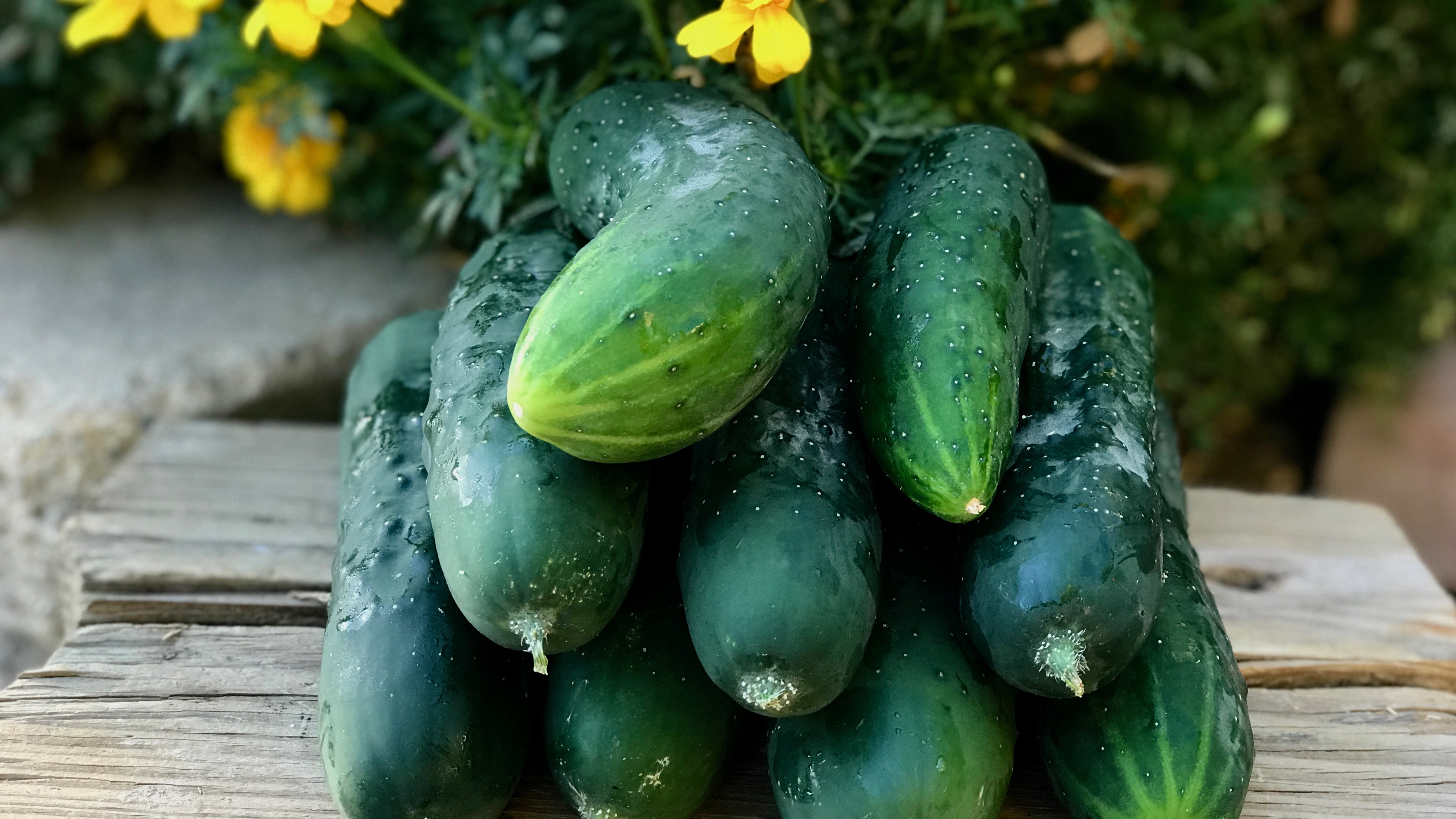 6 Quick Growing Vegetables to Plant NOW in Late Summer for a Fall Harvest